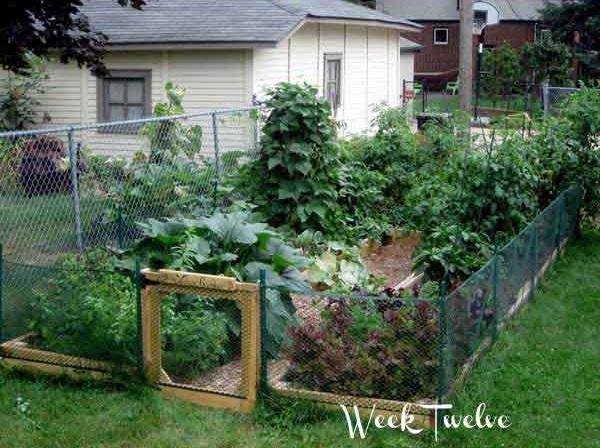 3 - 4 - build-your-own-vegetable-garden-2.jpg