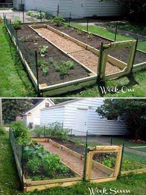 3 - 7 - build-your-own-vegetable-garden-6.jpg
