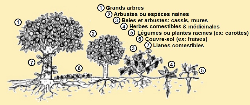 17 - Jardin-Forêt schéma.jpg
