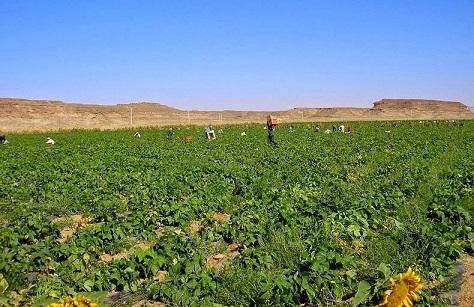 wadi-rum-farming-4[2].jpg
