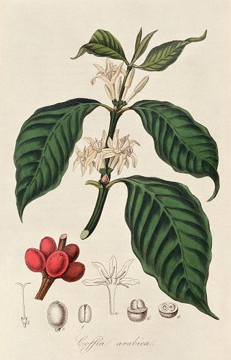 Planche botanique.jpg