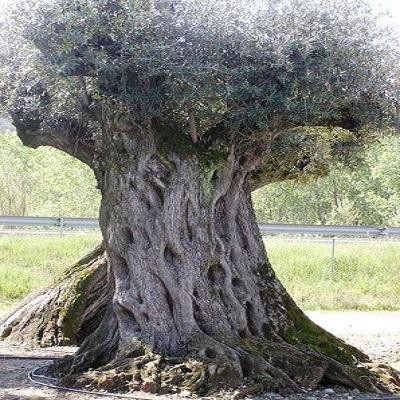 olivier millenium 2.jpg