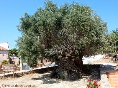 Vouves-musee-olive-et-olivier.jpg