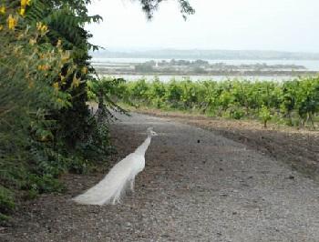 11 - 10 - 5 - Cathédrale vue de la route de Palavas.jpg