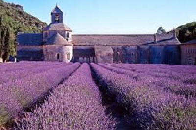 3 - Lavande vraie officinale (Abbaye de Senanque) _ lavandula angustifolia.jpg