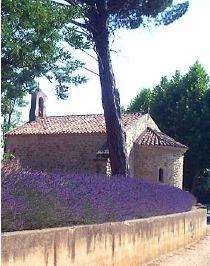 4 - Lavande vraie officinale  _ lavandula angustifolia.jpg