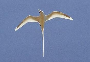 33 - Europa Paille en queue à brin blanc 350 x 240.jpg