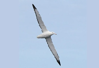 65 - Amsterdam l'albatros 350 x 240.jpg