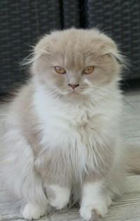 chaton 72 -   Lizie.JPG