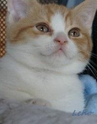 chaton 65 - Leho.JPG