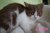 chaton 59 - Luna.JPG