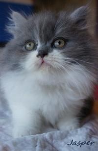 chaton 53 - Jasper.jpg