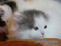 chaton 51- Jefferson.jpg