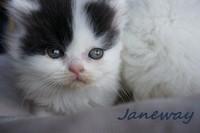 chaton 48 - Janeway.jpg