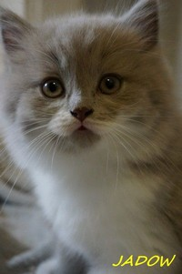 chaton 46 - Jadow.jpg