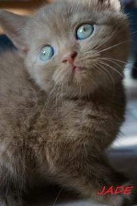 chaton 45 - Jade.jpg
