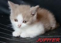 chaton 42 - Jupiter.jpg
