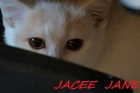 chaton 39 - Jacee Jane.jpg
