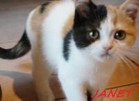 chaton 37 - Janet.jpg