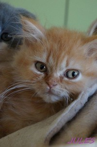 chaton 33 - Jules.jpg