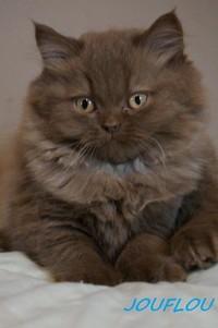 chaton 29 - Jouflou.jpg