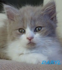 chaton 28 - Daryl.jpg