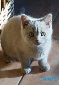 chaton 24 - James.jpg