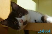 chaton 23 - Java.jpg