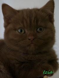 chaton 17 - Izia.jpg