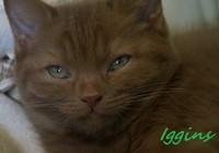 chaton 15 - Iggins.jpg