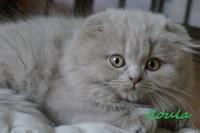 chaton 14 - Iloula.jpg