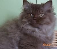 chaton 13 - Inio.jpg