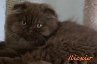 chaton 12 - Ilixio.jpg