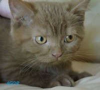 chaton 6 - Igor.jpg