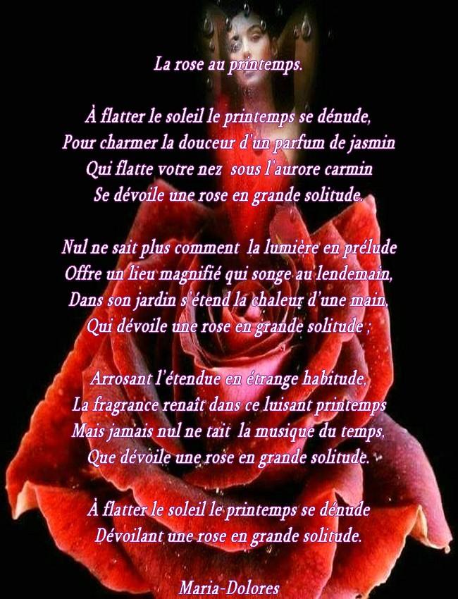 La rose au printemps....jpg
