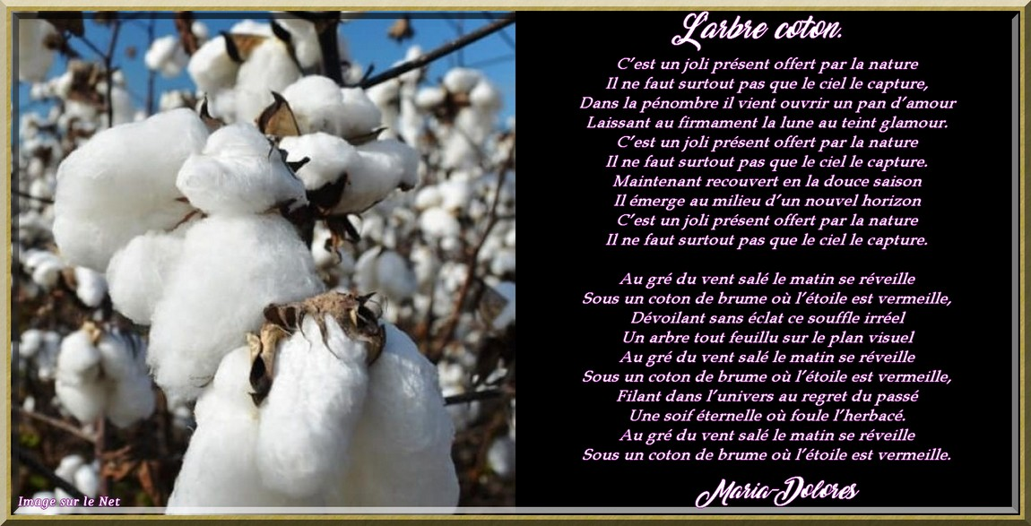 L\\\'arbre coton