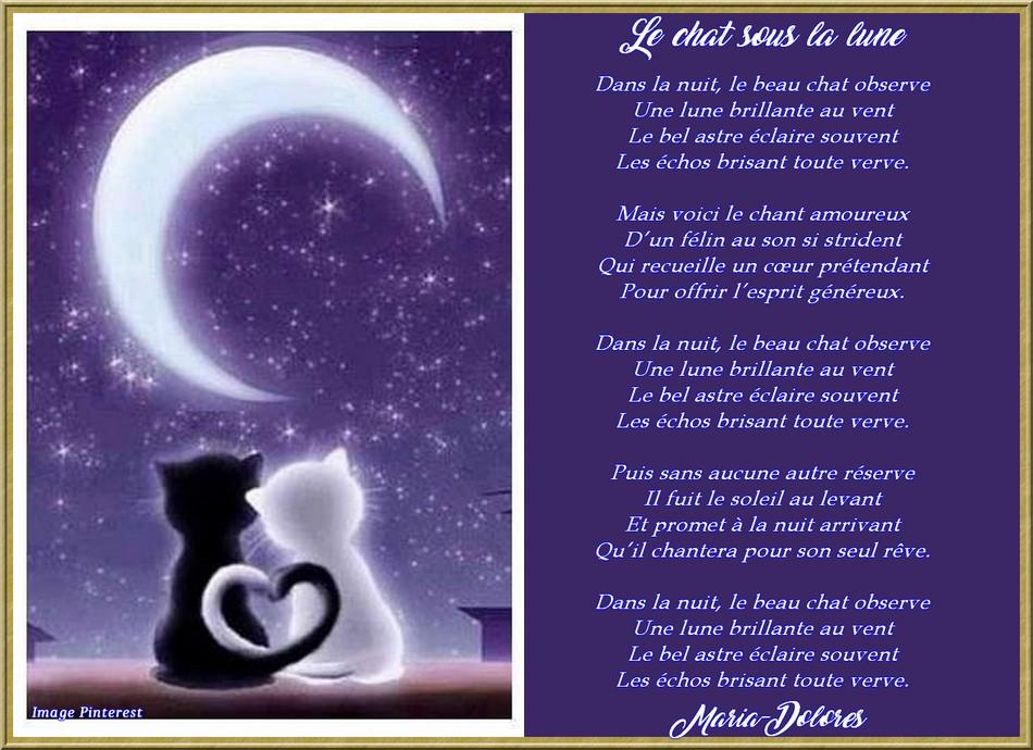 Le chat sous la lune