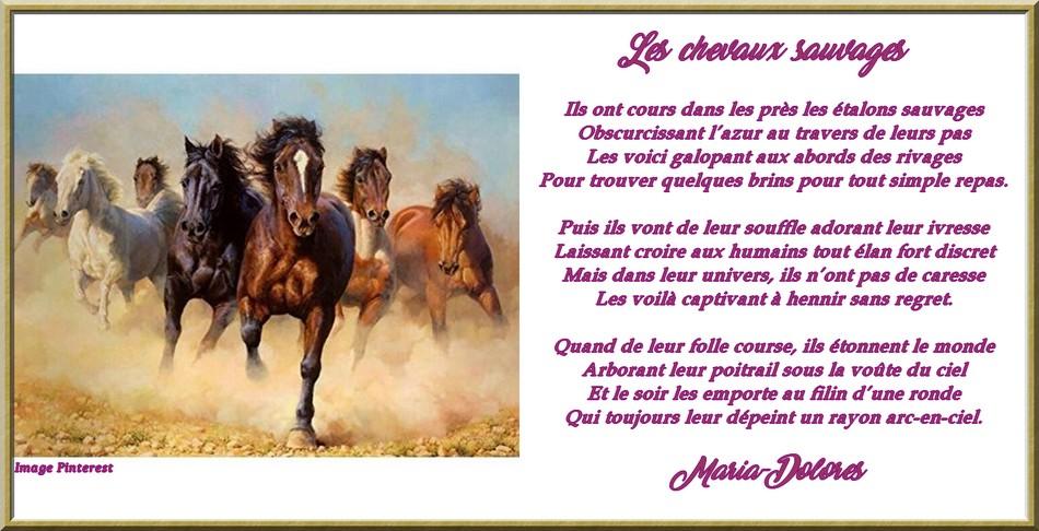 Les chevaux sauvages Stances