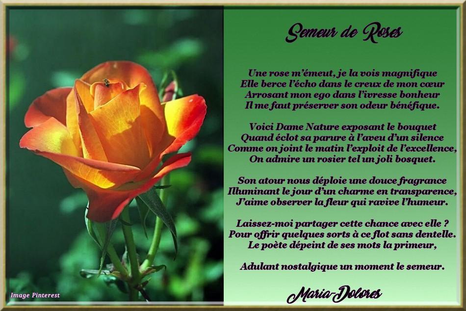 Semeur de roses