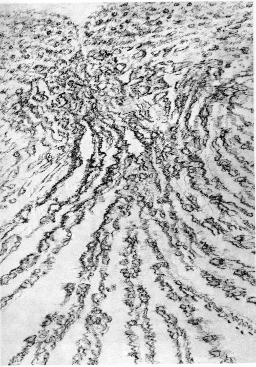 Henri Michaux_Dessin mescalinien_L'infini turbulent_1964