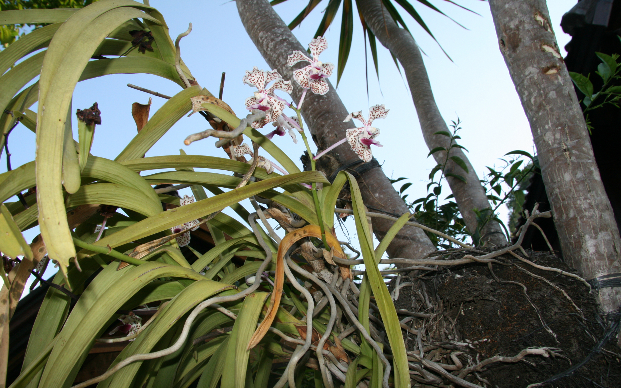 LES ORCHIDEES D'ISABELLE