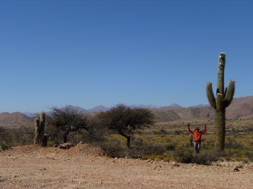 3 cactus dans la descente de la quebrada de Jujuy