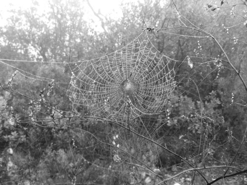 Toile dans le brouillard - Puyloubier