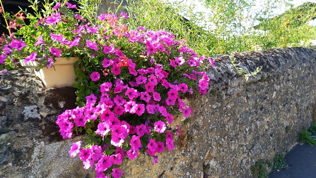 2019.07.14 Fleurs Neuvillalais (5).jpg