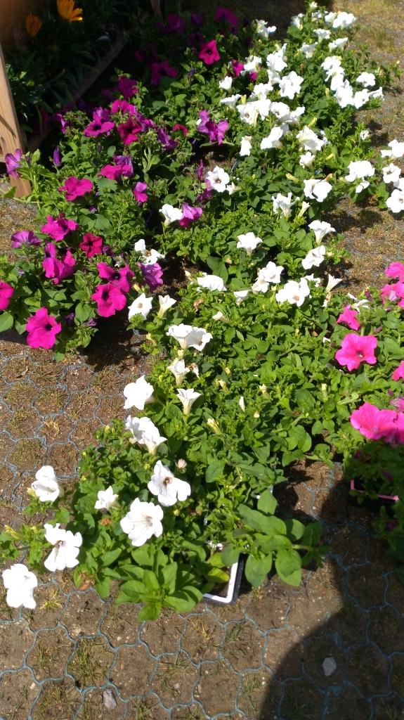 2021.05.07 Distribution fleurs (6).jpg