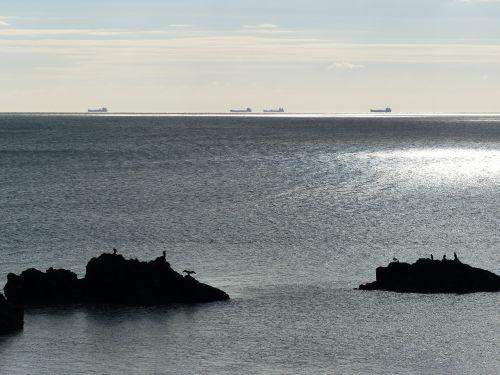 Grand cormoran sur îlots rocheux