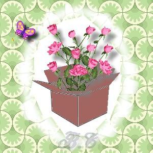 cadre boite fleurie.jpg