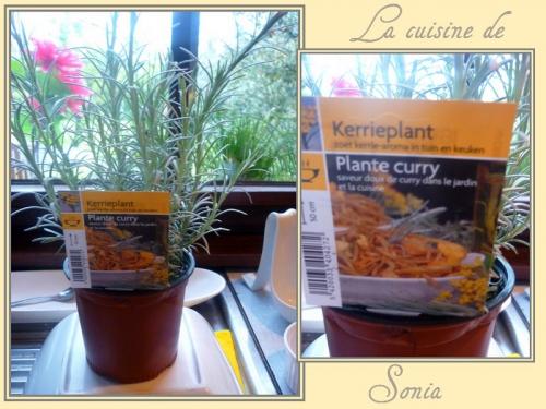 plante de curry.jpg