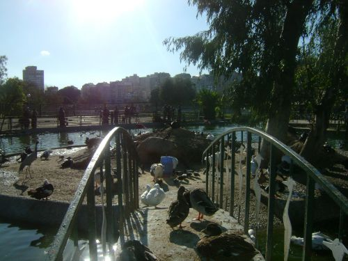 La mare aux canards du parc zoologique de Ben Aknoun (Alger)
