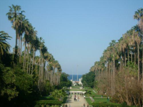Allée centrale du jardin d'essai du Hamma